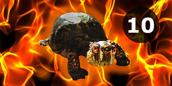 10-boosts-turtle-insidegameofwar